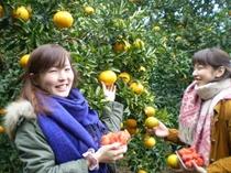 オレンジ狩りとイチゴ狩り