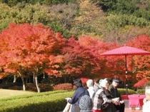 旧井上邸前の紅葉
