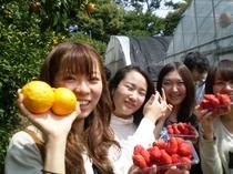 イチゴ狩りとオレンジ狩りが専用農園でできます。