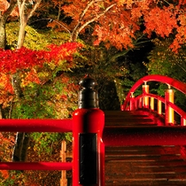 紅葉の時期の「河鹿橋」はライトアップされます