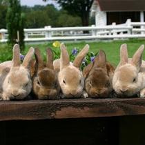 【伊香保グリーン牧場】かわいいウサギちゃんとの触れ合いコーナーで癒されます♪
