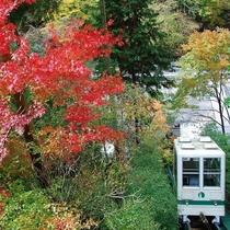 紅葉の中をくぐり抜けるように建物までお送りいたします。紅葉とケーブルカー
