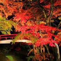 紅葉ライトアップで有名な河鹿橋 見ごろは11月上旬~中旬です。