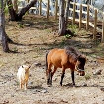 併設の与那国馬ふれあい牧場
