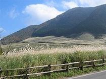 仙石原ススキ野原は秋の空に映えて見物です
