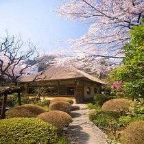 【山家荘】春には桜が庭園を彩ります