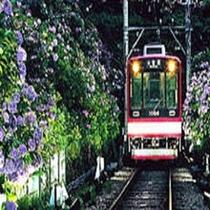 六月のあじさい電車は箱根の風物詩