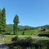 周辺の風景