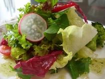 季節の野菜サラダ バジルドレッシング