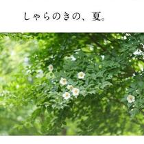 2016年8月 六、山荘しゃらのきの回想集