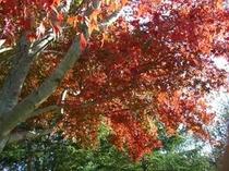 周辺の風景(秋)