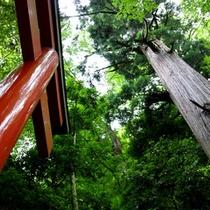 貴船神社 鳥居と木