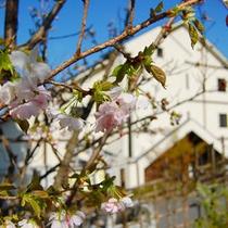 春の外観 雪解けとともにあるの訪れを知らせてくれる山桜