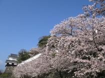 """さくら名所100選""""大村公園""""5月中旬には、30万本の花菖蒲が公園内を埋め尽くし西日本一を誇る大菖蒲"""