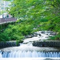 藤木川の清流を眺めながら