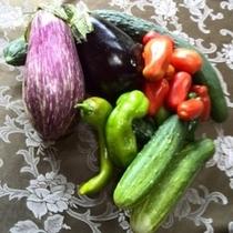 畑の収穫/どれも新鮮で美味