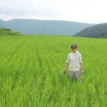 契約農家から仕入れたお米はもっちりとして甘みも◎