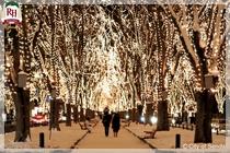 光のページェント(12月) [仙台市観光交流課様]