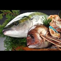 日本海直送の新鮮な海鮮(イメージ)