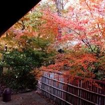 【庭・秋の紅葉】
