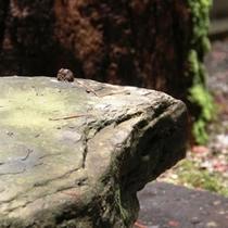 木漏れ日を感じる中庭です