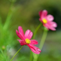 *敷地内のお花
