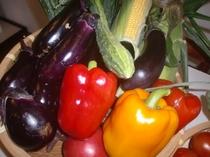 友人から届く新鮮野菜