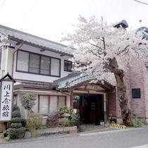 *春/山懐のくつろぎの宿 越後村杉温泉 川上屋旅館へようこそ♪