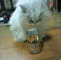 ほろ酔いプラン ビール・おつまみ付