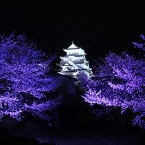 <姫路城 三十六景>姫路城と夜桜  ※提供 姫路市