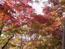 瑞宝公園-紅葉
