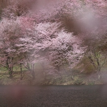 春の中綱湖畔