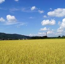 伊賀米の田園風景。当館でお出しする特別栽培米。