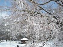 彫刻公園の冬景色―樹氷が創り出す景色はまさに芸術!