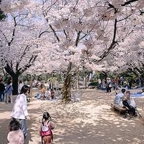 【小丸山公園】桜の名所としても有名な小丸山城跡。