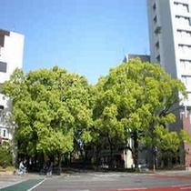 ホテル北側 宮崎県庁前交差点