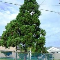 おやこの木2