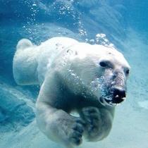 【旭山動物園】動物のお食事「もぐもぐタイム」は必見♪