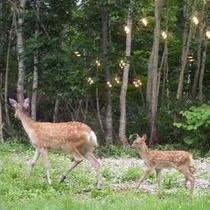 ディアバレー〜鹿の遊ぶ谷♪