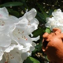 石楠花ととん子さん
