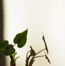 天然の空気清浄機 漆喰の壁