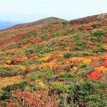 【秋の栗駒山】紅葉を見ながら登山はいかがですか。