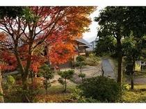 紅葉とお茶室