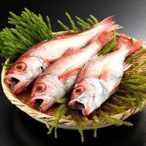 ◆のど黒など・・新潟の上質な旬の食材を堪能(一例)