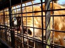 動物たちを間近で体験できる大興奮の「サファリパーク」!!