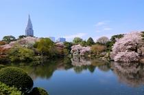 新宿御苑 春