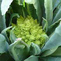 野菜の宝庫!空知で育った新鮮野菜をお召し上がりください♪
