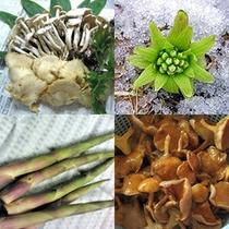 地元志賀高原で採れた山菜を季節に応じてお出ししております。