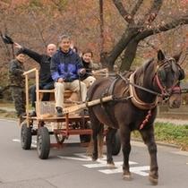 ◆馬車でお散歩をお楽しみいただけることも!