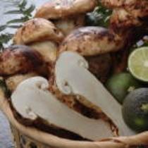 秋の味覚「松茸」は9月から予定